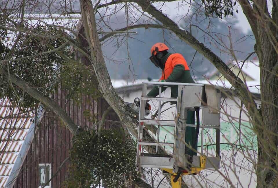 Zimowe przycinanie drzewek i krzewów