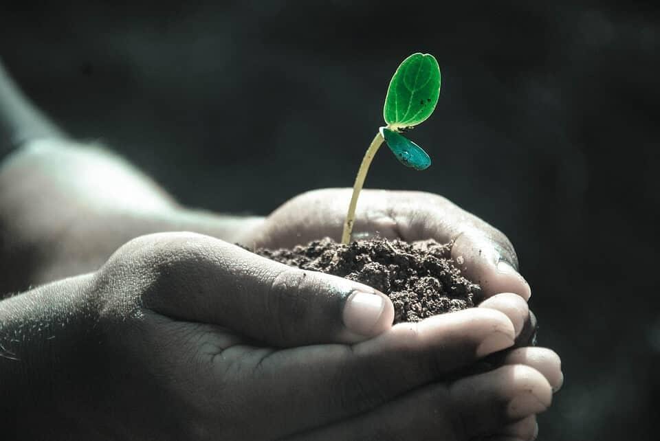 Jak rozpoznać żyzną ziemię pod uprawę w ogrodzie?