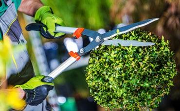 Pielęgnacja ogrodów Puszczykowo