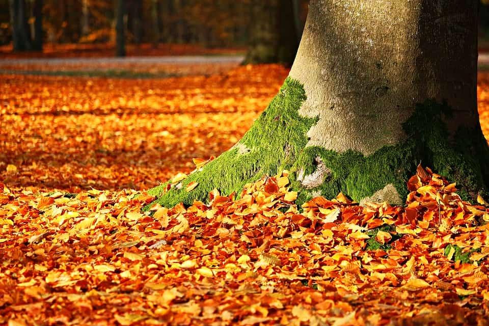 Blog - Pielęgnacja ogrodu - Kompost z liści - Jak go przygotować?