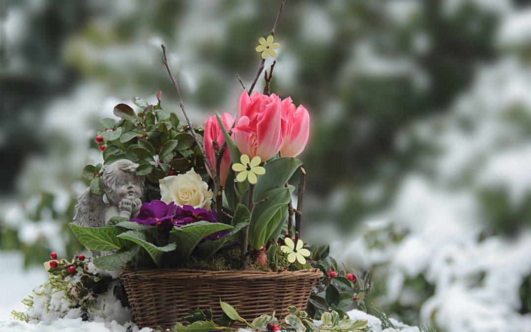 Blog - PIELĘGNACJA OGRODU - Czym okryć rośliny ogrodowe na zimę?