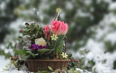 Czym okryć rośliny ogrodowe na zimę?