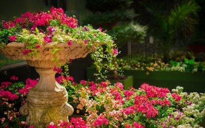 Rabata z iglakami w Twoim ogrodzie
