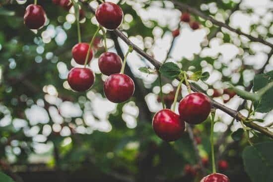 Kiedy sadzić drzewa owocowe?