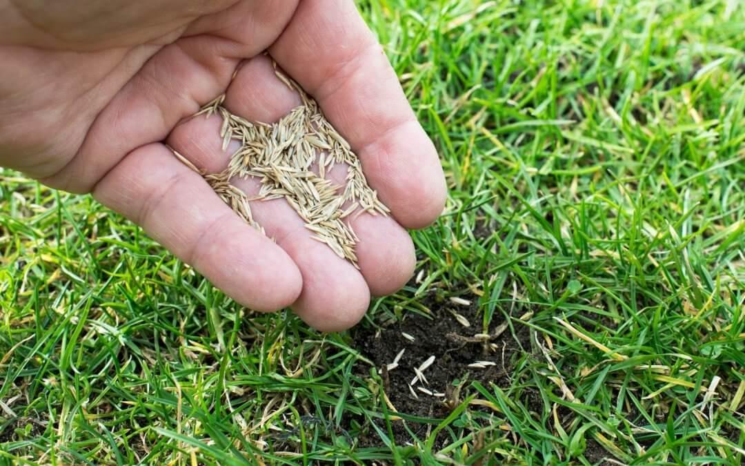Kiedy siać trawę?
