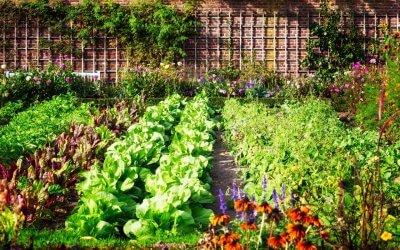 Zakładamy ogródek warzywny
