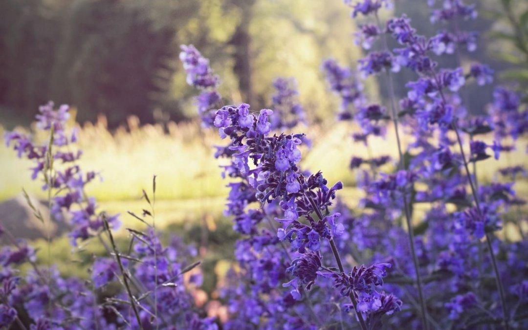 Byliny kwitnące od czerwca do września. Jakie byliny wieloletnie kwitną najdłużej?