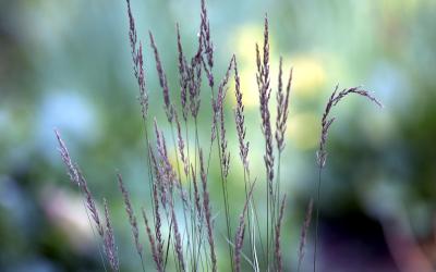 Trawy ozdobne – najpopularniejsze odmiany ogrodowe i warunki ich uprawy