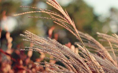 Przycinanie traw ozdobnych – jak robić to dobrze?