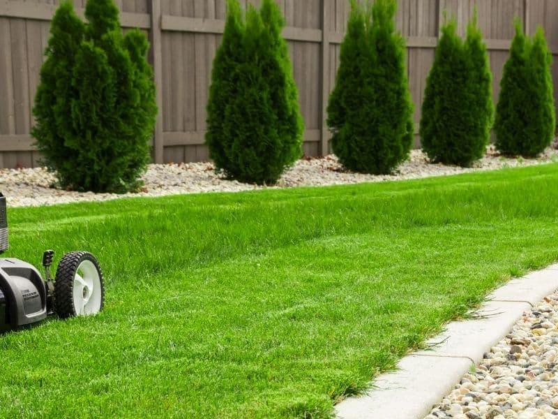 Napowietrzanie trawnika – kiedy przeprowadzić aerację?
