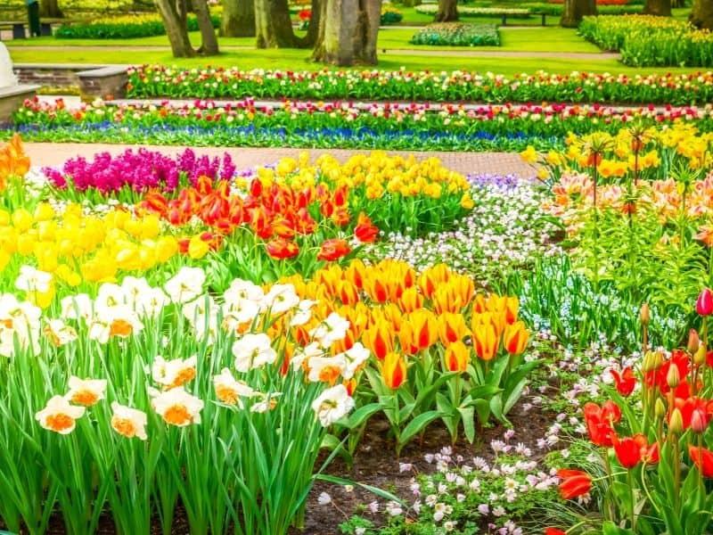 Wiosenne prace w ogrodzie: co musisz zrobić, aby mieć piękny ogród wiosną