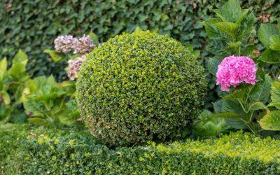 Motyw kuli na ogrodowej rabacie