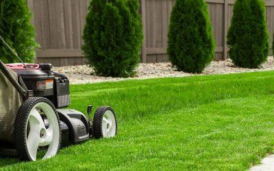 Trawnik po zimie – wiosenna reanimacja w kilku krokach