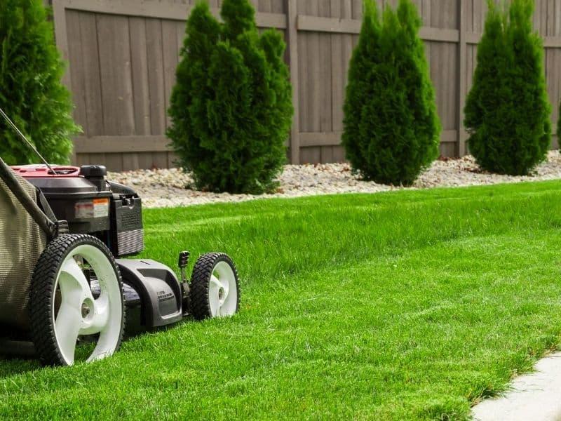 Trawnik po zimie - wiosenna reanimacja w kilku krokach