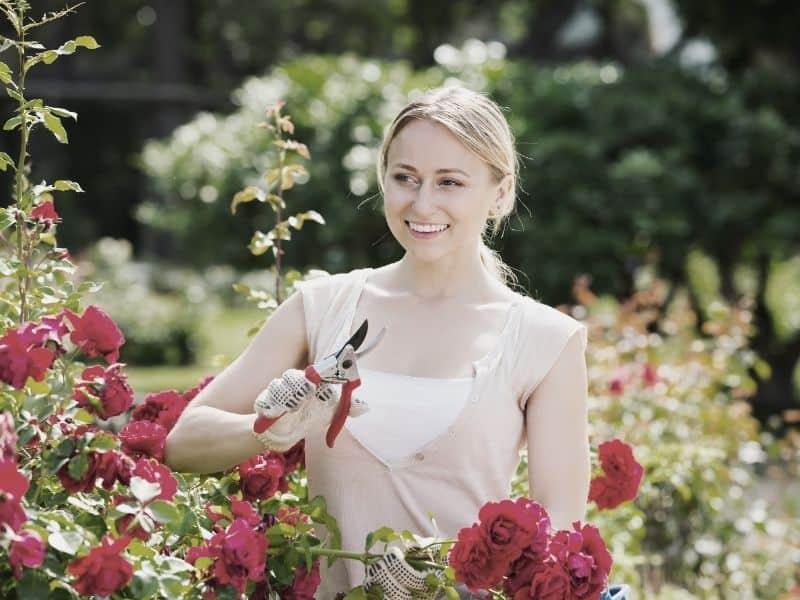 Jakie rośliny kwitną i owocują w ogrodzie w lipcu?
