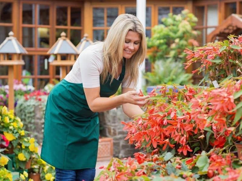 Prace pielęgnacyjne w ogrodzie w lipcu