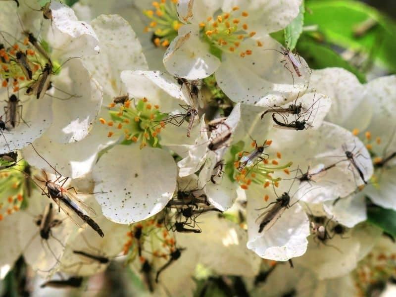 Rośliny odstraszające komary – warto je mieć w swoim ogrodzie