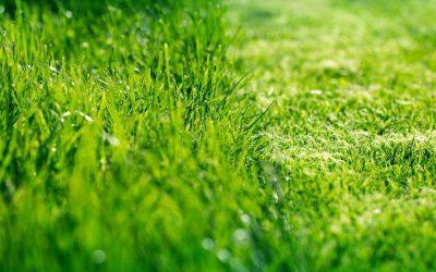 Jak efektywnie wykorzystać skoszoną trawę?
